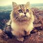 Milo the Munchkin Cat の動画、YouTube動画。