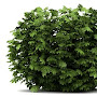 Just some bush