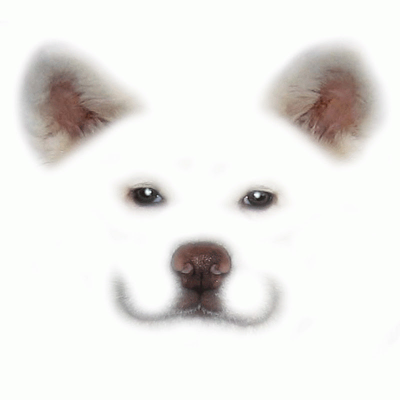 秋田犬げんき
