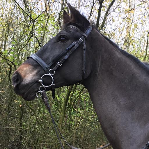 Supreme.Equine