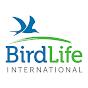 BirdLifeVideo