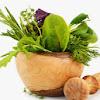 الاعــشــاب والنباتات والغذاء السليم
