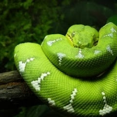 TetraFauna Viquarium Review - Interesting Reptile Habitat