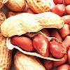 Feed the Future Peanut Lab