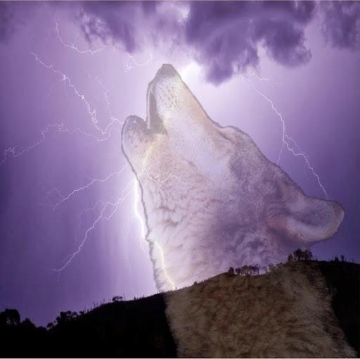 117Cyberwolf