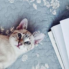 Moonlight Kitty DIY and tutorials