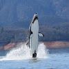 Innespace Seabreacher