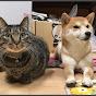 shiba&cat 柴犬ハナ&黒猫クロ