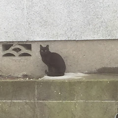 バーチャル魔界猫黒猫カロン