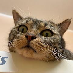 PcuKeuKen