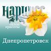 """Салон красоты """"НАРЦИСС"""" (Днепропетровск)"""