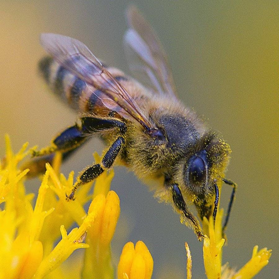 boney bee