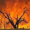 Mariposa Fire