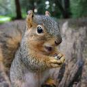 Hyper Squirrel