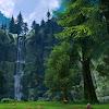 ელვინის ტყე