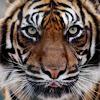 Wild Animals  Planet