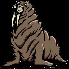 Billy Walrus