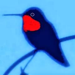 HummingBirdChannel