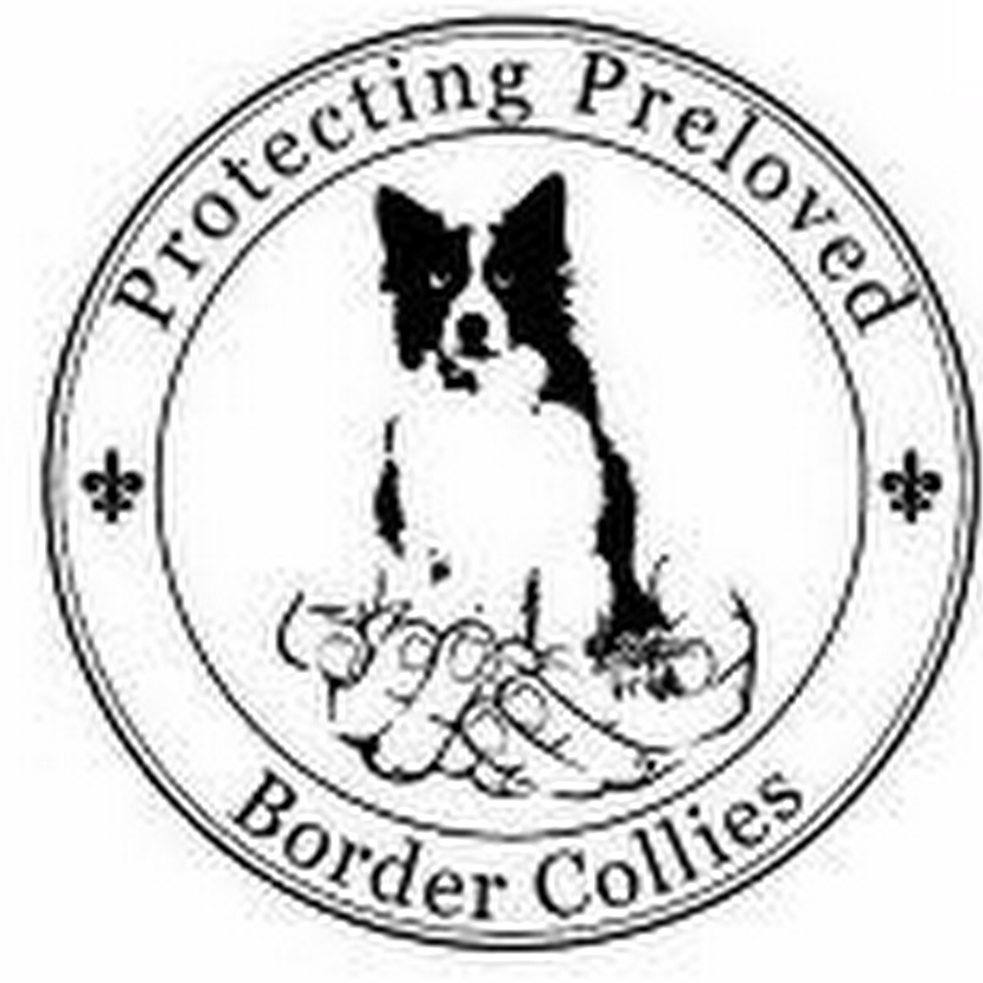 border collie coloring pages - border collie colouring pages page 2
