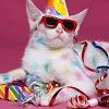 Kitten Stan
