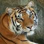 TigerStar1259
