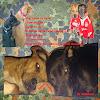 Kettenhund61
