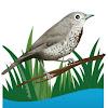 audubonnaturalist