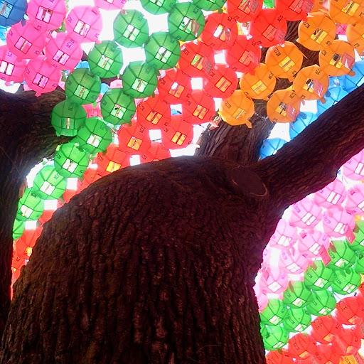 sung Bin Lee