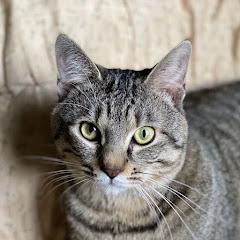 保護猫『るる らら』物語