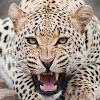 Africanspice Safaris