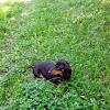 Людмила Леонова