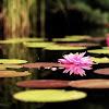 Musique Relaxation - Nature - Zen - Frantz Amathy