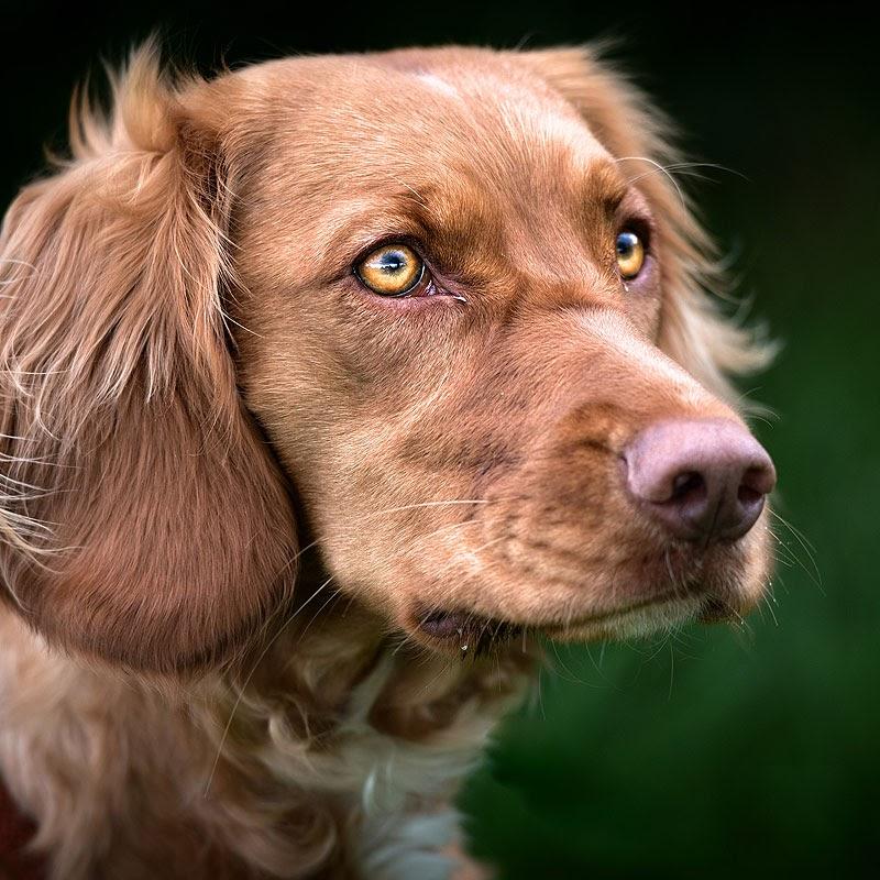 Hundeerziehung Hundepension Salostowitz