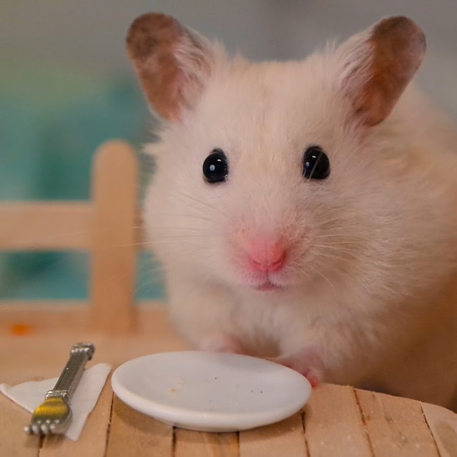 Uncategorized Hamster Free Vids vanillahamham youtube