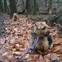 Norfolk Terrier の動画、YouTube動画。