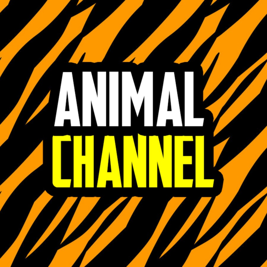 animal channel youtube