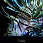 Kinetic Illusions Creative Studio