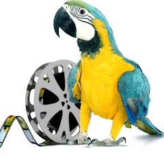 Blue Parrot Media