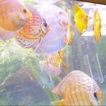 FishTankFranken