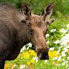 Visit Anchorage
