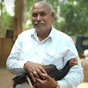 Raghunath natukodi farms treatment and caring