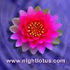 nightlotusvideo
