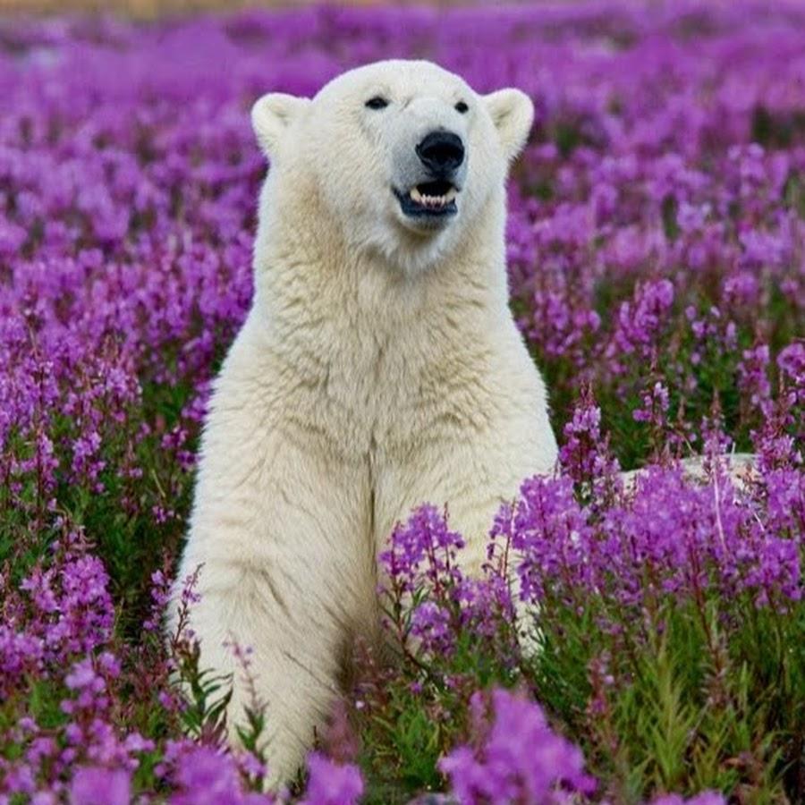 фото природа животных и цветы
