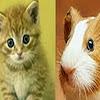 หนู แมว