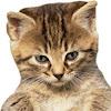 KittyKickStix