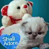 ShallAdore Cats