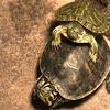 TurtletToob nmn