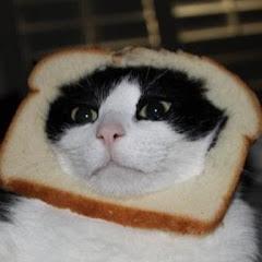 Catty Matt