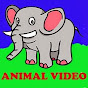 Animal Video (video Hewan binatang) video