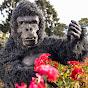 Barbú Gorila